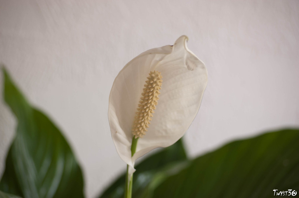 Fleur en pseudo macro 5476369194_65d735e413_b