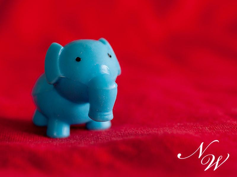 55/365 elephant