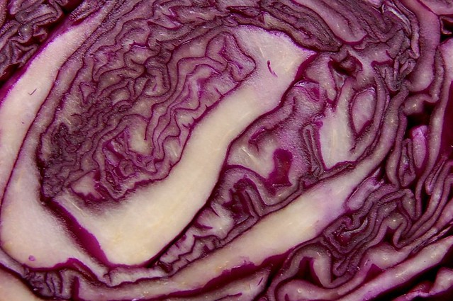 Close up of red cabbage by Eve Fox, Garden of Eating blog copyright 2011