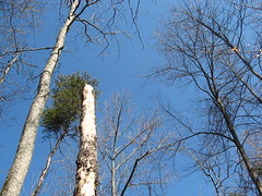 Blue sky over the timber