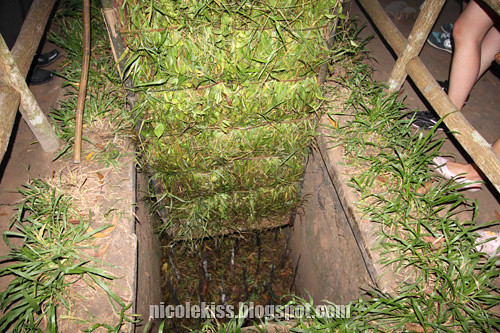 forest trap