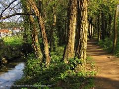 senda río Gafos ( Pontevedra )
