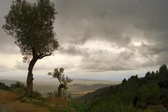 trees on a hill, a cloudy spring day (ati sun) Tags: mallorca alar balearics wtmwgroupiconwinner