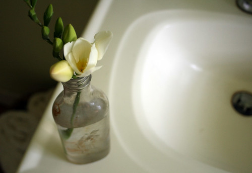 freesia in vase