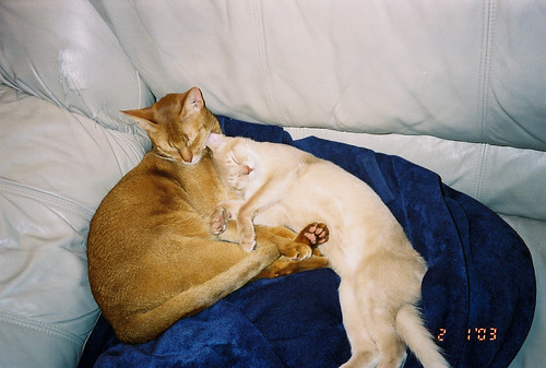 Phoenix & Baby Pharaoh