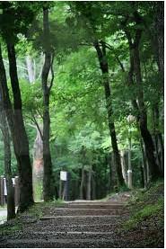 거제자연휴양림
