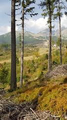 the look ahead (Tobias Pfeifer) Tags: trres wood landscape slovakia mountain green summer