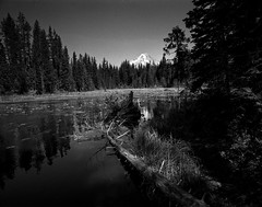 Lake Trillium, Mt Hood, Oregon (tmalsburg) Tags: darktable epsonv700 film ilfordhp5 landscape mamiya7 mediumformat oregon