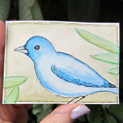 Indigo Bunting (JoMo (peaceofpi)) Tags: watercolor bird bunting bluebird indigo drawing illustration animal aceo atc artcard peaceofpi canada miniature mini