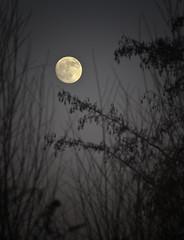 The Moon (scuba_dooba) Tags: uk trees england moon mill dark twilight dusk cropped houghton cambridgeshire 18200mm