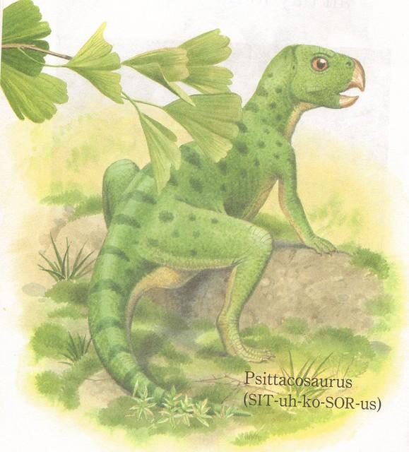 Psittacosaurus Baby