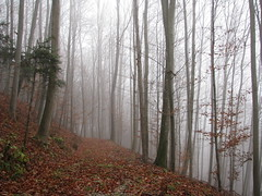 Foggy Forest Pt. II (Been Around) Tags: travel november autumn tree fall nature fog austria sterreich europa europe novembre nebel hiking travellers laub herbst natur foggy eu hike wald bume sr baum obersterreich wandern autriche weg austrian 2010 aut steyr wanderung o ennstal upperaustria nebelig laubbaum 5photosaday a laubbume onlyyourbestshots hauteautriche concordians thisphotorocks worldtrekker visipix flickraward expressyourselfaward flickrunitedaward bauimage oberdambach oberdambachbeisteyr foggyforestptii