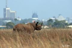 Nairobi Skyline.. (Mozambique - Moments) Tags: explore blackrhino nairobinationalpark bairobi