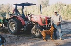 Sidi Limehouse of Rosebank Farms (via Rosebank Farms)