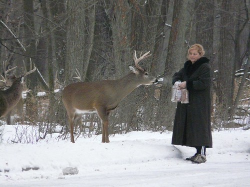 Lady Feeding the Deer