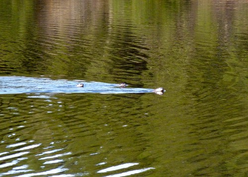 otters laf res john eaton