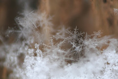 No Two Are Alike (laszlo-photo) Tags: winter ohio snow ice snowflakes day cloudy cleveland january h2o frozenwater richmondheights newfallensnow sotheysay notwoarealike