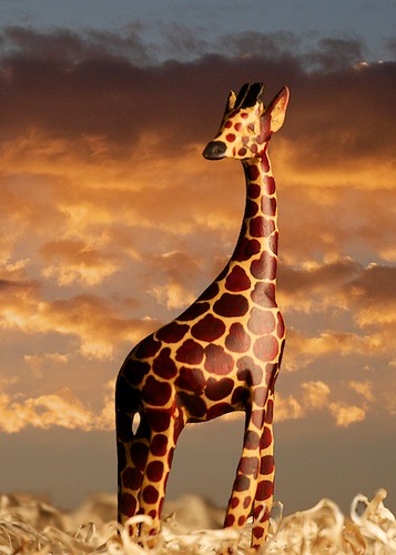 Giraffe on the