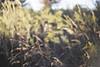 beauty is whatever gives joy (jamie {74}) Tags: blur film fuji scan nikonf100 grasses reala filmscan oof fujireala100 hbw blartsy