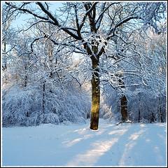 Et ça, vous vous souvenez? (Barbara DALMAZZO-TEMPEL) Tags: wood winter snow tree hiver neige arbre bois seineetmarne roissyenbrie forêtdeferrière