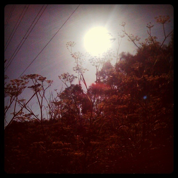 Under the power lines (and the weeds that only seem to go above head height under their intense radiation ... hmmmm)