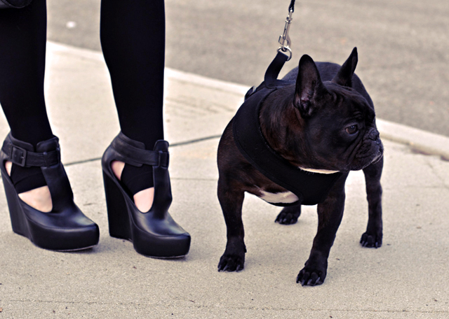 black french bulldog, frenchie, shoes, platform wedges, velvet angels shoes, wedges, french bulldog, fashion bloggers, DSC_0056
