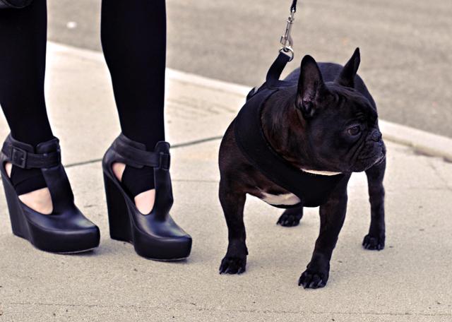 black french bulldog, frenchie, shoes, platform wedges, velvet angels shoes, wedges, french bulldog, fashion bloggers, DSC_0056