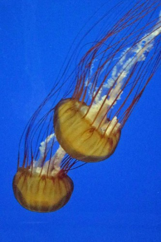 Oregon Coast Aquarium 8