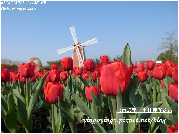 台中后里_中社光觀花市20110130_R0017613