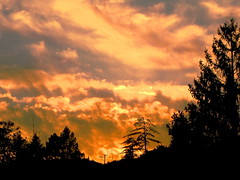Sunset between the trees (Bionic Rhonda, back slowly) Tags: withsky impressedbeauty impressedbyyourbeauty ringexcellence dblringexcellence doubleringexcellence partofthefirstimageoffoginsanfrancisco drivebyimagecindersmom