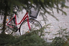 Tree-lined Bicycle (TheFella) Tags: street travel red tree leaves bike bicycle wheel canon eos 50mm europe basket sweden branches cobbled cycle sverige 18 scandinavia cobbles malm conor tyres macneill 500d northerneurope thefella conormacneill