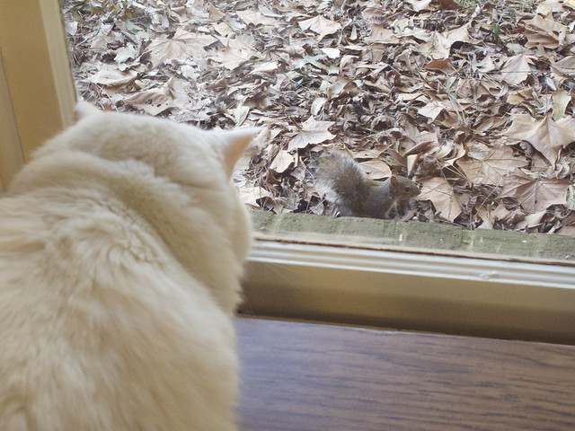 Nilla and the Squirrel 0017