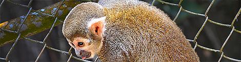 -small-soteropoli.com-fotos-fotografia-de-ssa-salvador-bahia-brasil-brazil--zoo-zoologico