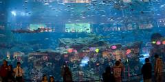 Aquarium in Dubai Mall, including 20 sharks... (dirk huijssoon) Tags: cruise dubai middleeast emirates arab arabian oman luxury persiangulf arabemirates luxurycruise costacruise gulfstates costacruises oilwealth costadeliziosa costadeliciosa