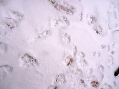 Snow! 2011