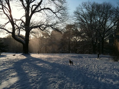 Snowy morning in Ft. Greene Park
