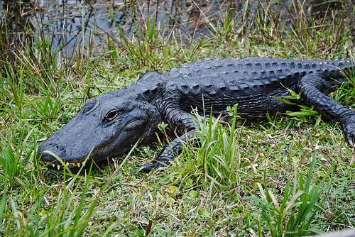 2011 02 06 Everglades-2
