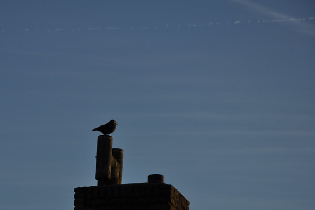 crow on a chimney