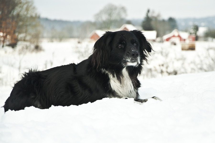 The eldest (Rufus)