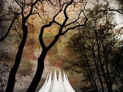 Amongst the trees. (Sascha Unger) Tags: wood iris light urban tree berlin art silhouette architecture kreuzberg germany garden licht angle perspective sascha architektur wald garten baum perspektive iphone tempodrom anhalterbahnhof sascha2010 saschaunger irisphotosuite iphonesaturdays