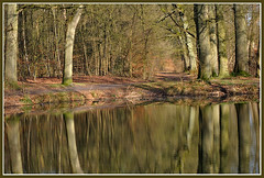Pond in the Wood (Jan Visser Renkum) Tags: wood pond bos reflexions renkum vijver reflectiom reflectie supershot abigfave renkumsbeekdal oostereng thenaturesgreenpeace mothernaturesgreenearth
