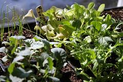 seedlings 025