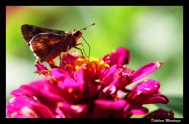 borboleta 06