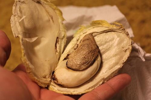 Inside Mango Seed