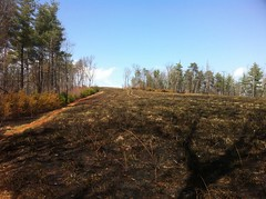 Controlled Burn at Food Plot