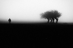 s.t. (Effe.Effe) Tags: trees bw man monochrome fog grain bn