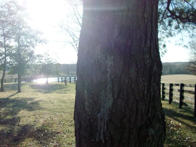 tree climbing 009