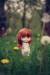 Pip (deerdoefawn) Tags: brown green nature grass doll inspired dandelion redhead cape blythe takara bl kozy kape
