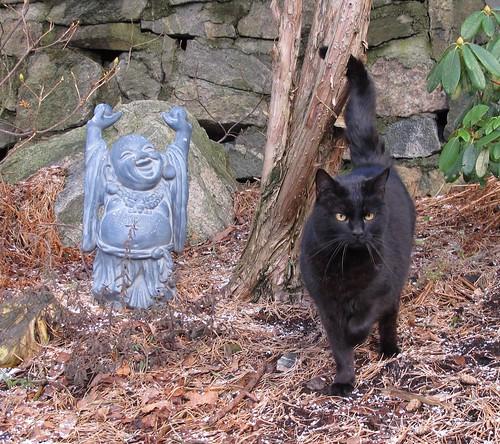 Katt og blid Buddha på Haukeberget