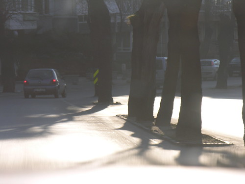 Útközép fák - Kadıköy